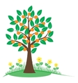 Summer tree with orange fruits vector image