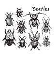 Set of hand drawn ink bugs beetles vector image vector image