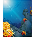 The corals near the rocks and the school of fish vector image