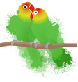 lovebirds parrots vector image