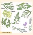 cosmetic herbs set vector image