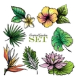 Tropical Leaves Set Color vector image