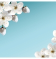 Cherry Blossoms vector image