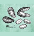mussels ink sketch on old paper vector image