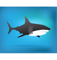 Shark Week vector image