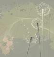 Floral background dandelions vector image vector image