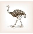 Ostrich sketch vector image
