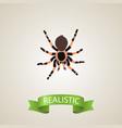 realistic black widow element vector image