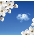 Cherry Blossoms Against The Sky And Clouds vector image vector image