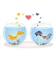Couple of fish in love vector image