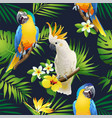 seamless pattern of parrots cockatoo on the tropic vector image vector image