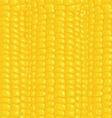 seamless texture corn vector image vector image