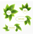 banners with leafs vector image