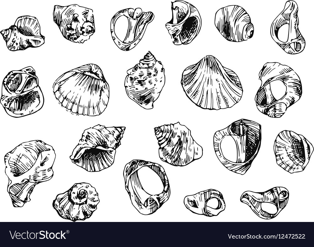 With sea shells vector