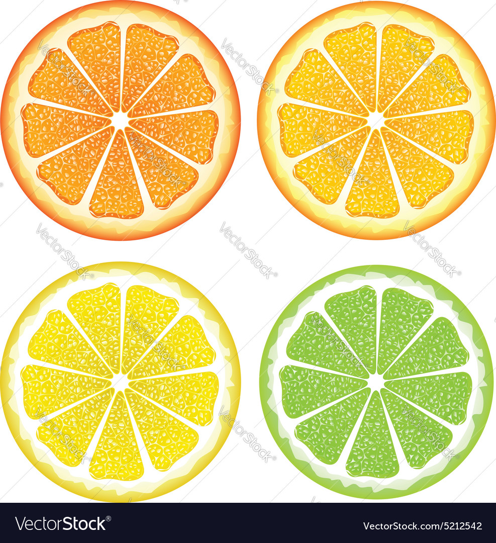 Various citrus slices2 vector
