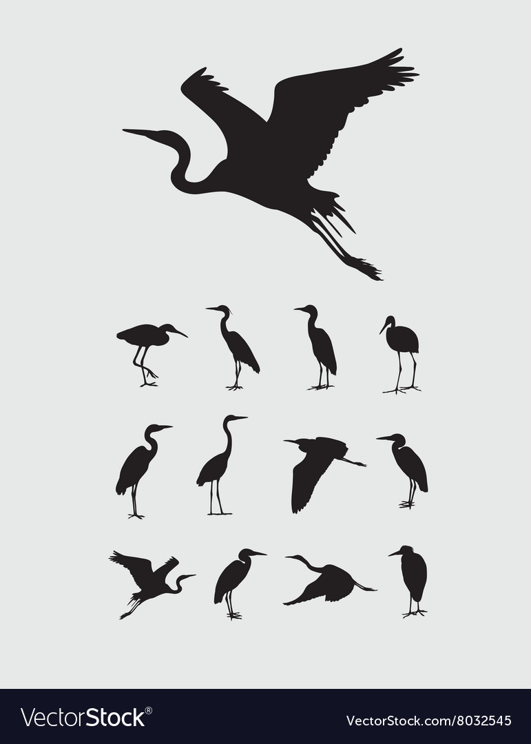 Heron and stork bird silhouettes vector