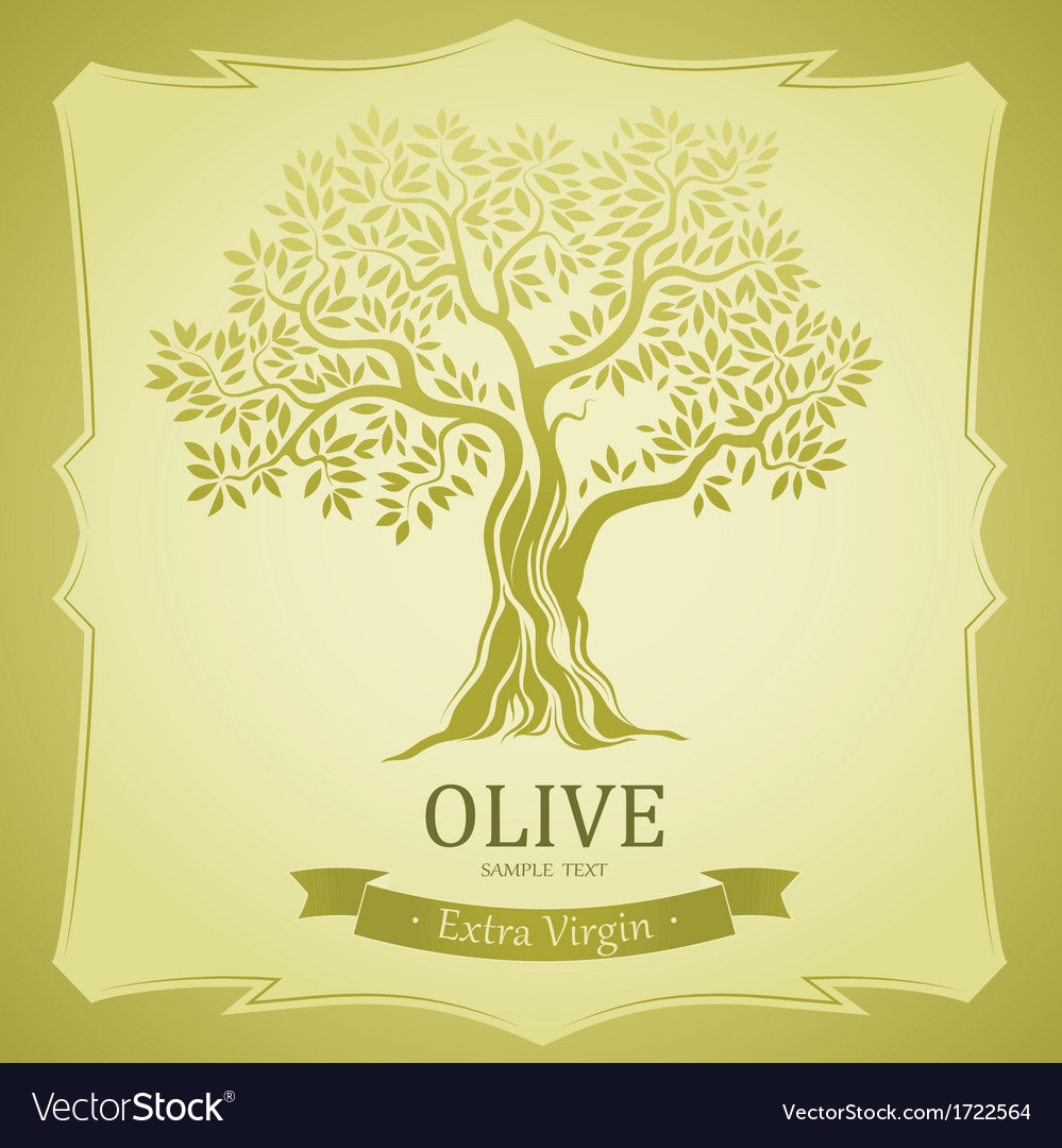 Olive background vector