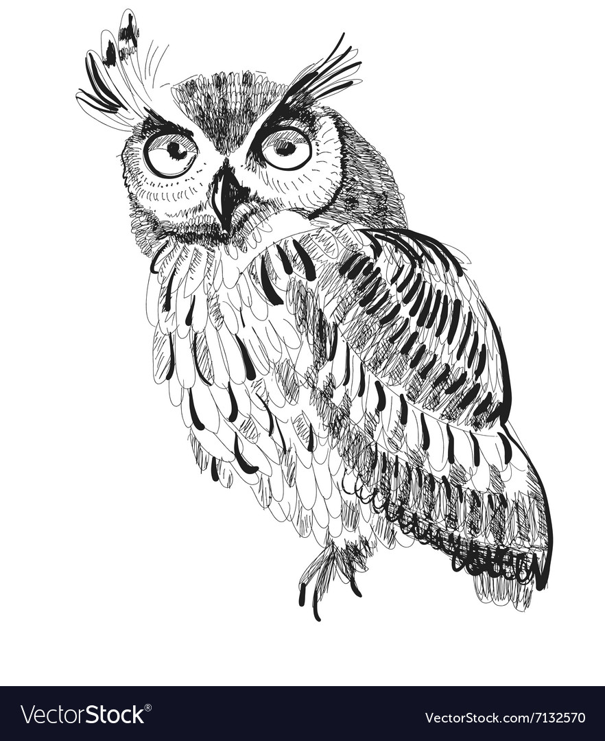 Owl handdrawing on a white background vector