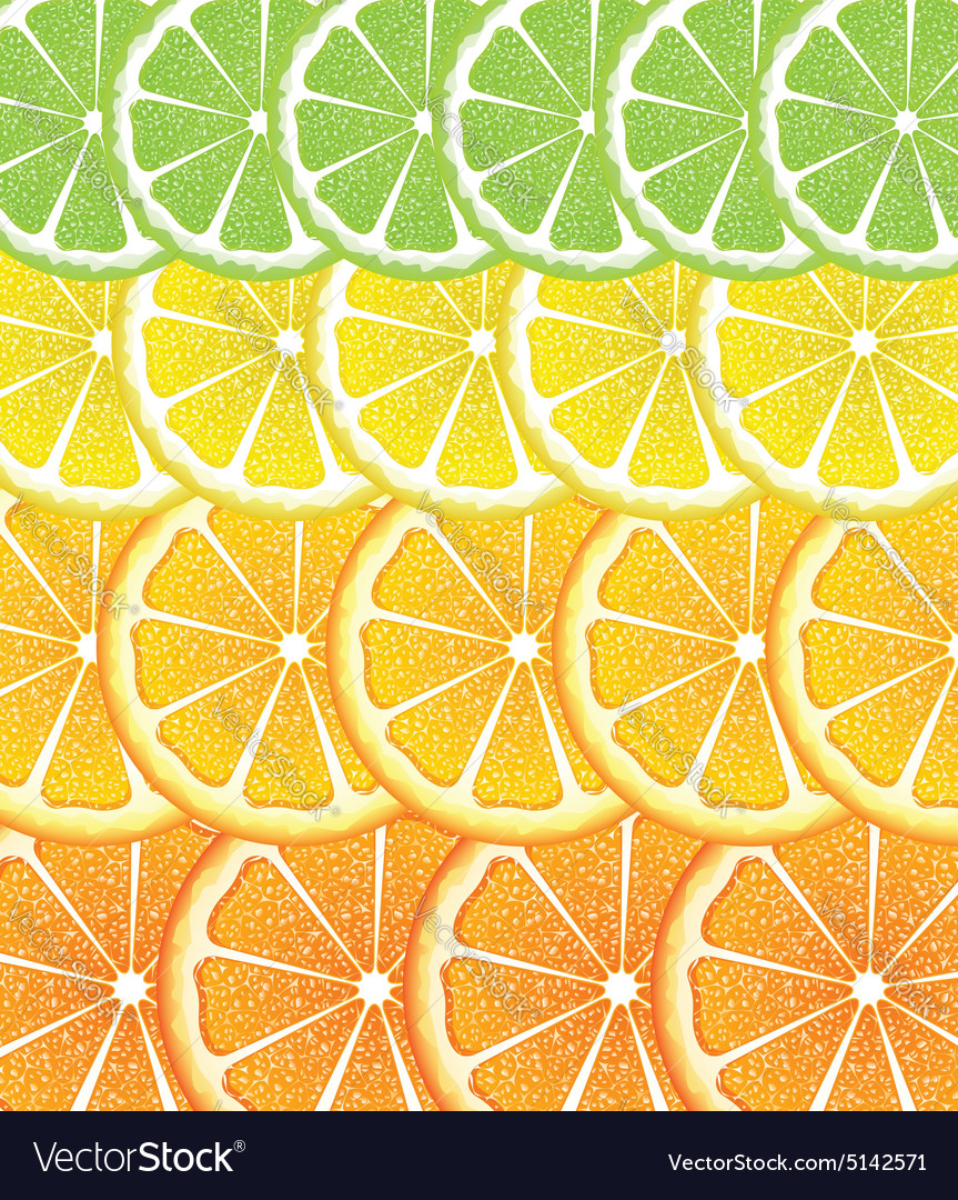 Various citrus slices4 vector