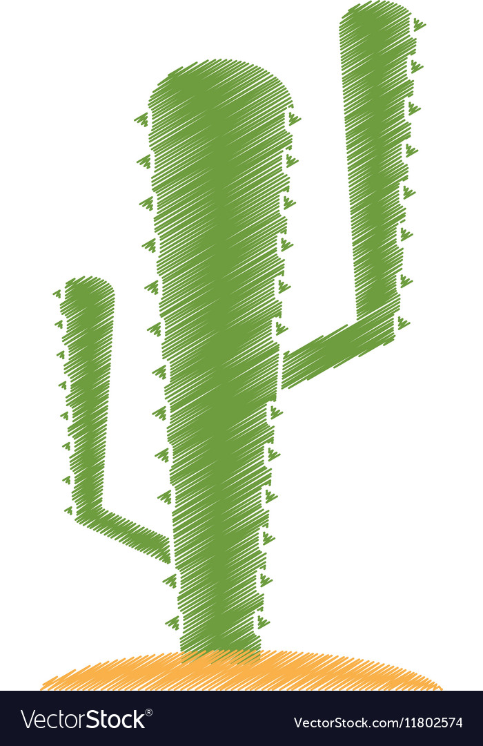 Isolated cactus plant design vector