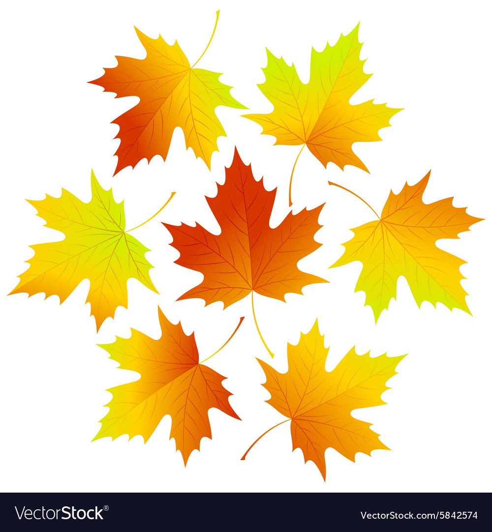 Set fall leaves for your design vector