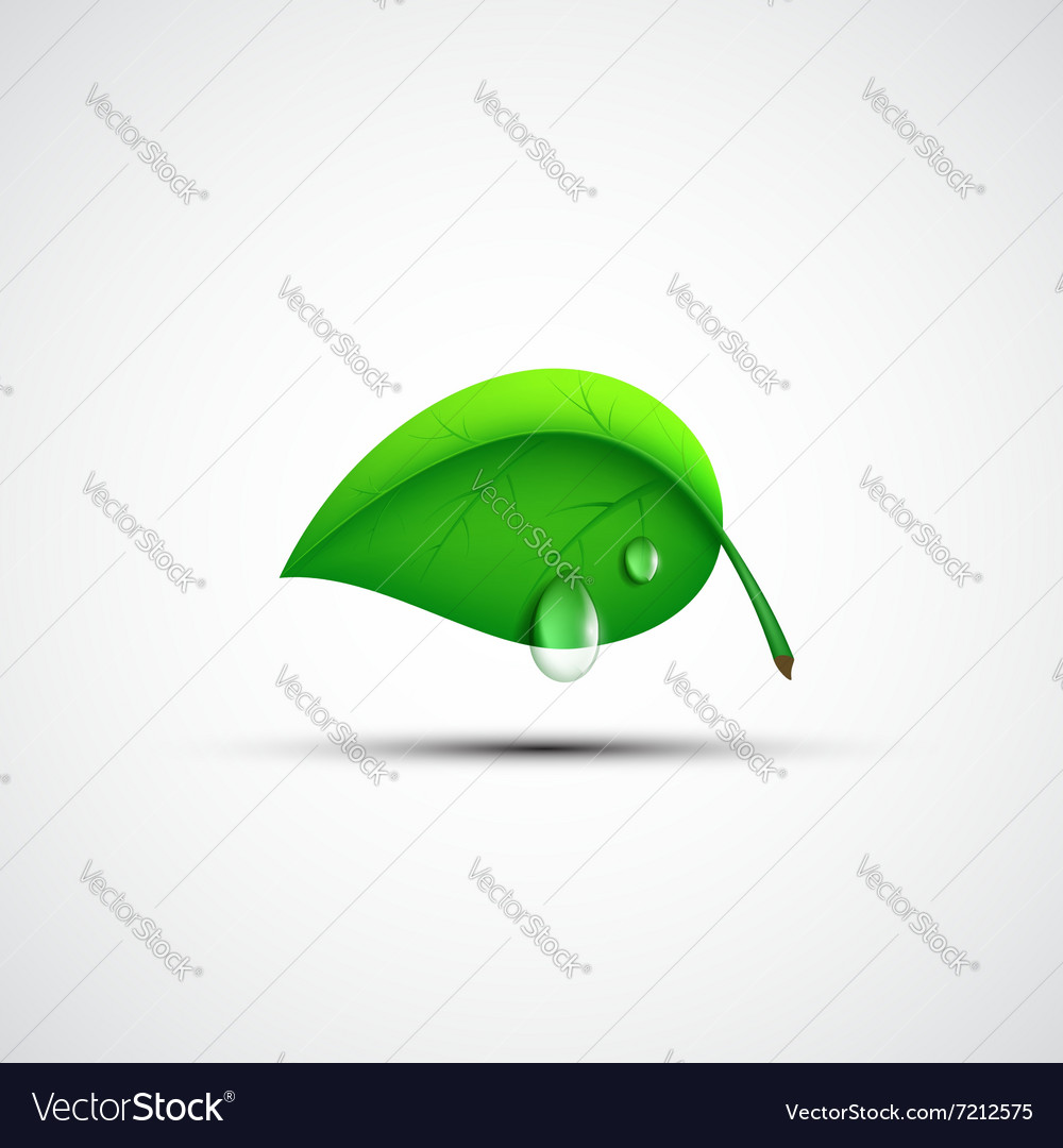 Green leaf logo with a drop of water vector