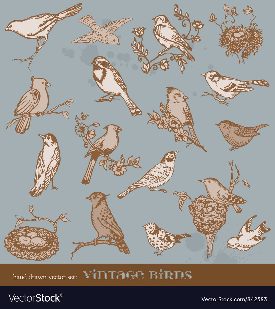 Hand drawn set birds vector