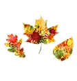 Autumn design of colorful leaves vector image