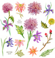 Spring floral collection watercolor beautiful vector image