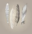 Graphic beautiful set of bird feathers on a brown vector image