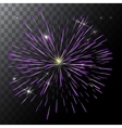 isolated colorful fireworks on a vector image