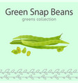 green snap beans vector image