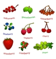 fruit set with texture vector image