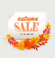 autumn sales card with colorful leaves vector image