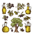 colored of different olive products vector image