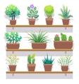 Indoor plants in pots flat icons set vector image