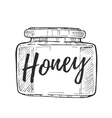 Honey jar freehand pencil drawing vector image
