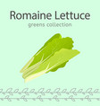 romaine lettuce image vector image