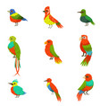 exotic birds from jungle rain forest set of vector image