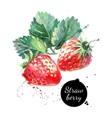 Hand drawn watercolor painting strawberry on white