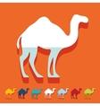 Flat design camel vector image