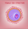 female egg structure vector image
