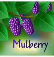 Blue juicy sweet mulberries on a branch for your vector image