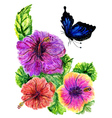 Painted Hibiscus3 vector image