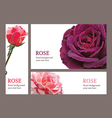 template cards with roses vector image vector image