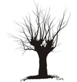 acacia tree vector image vector image