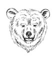 sketch by pen of a bear head vector image