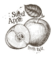 apple logo design template fresh fruit vector image