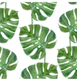 watercolor monstera leaf seamless pattern vector image
