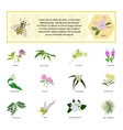 Honey set for banner flyer exhibitions posters vector image